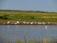 image of birds in quivira wetlands